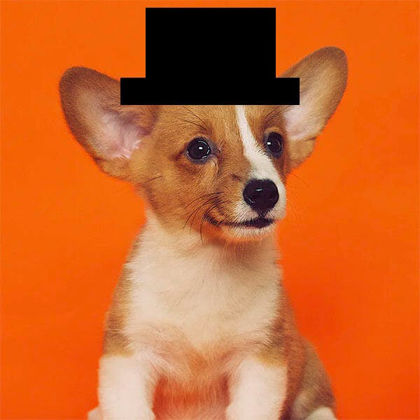 A dog photo with a poorly-drawn top hat